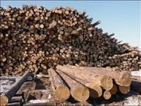 О пунктах приема и переработки древесины
