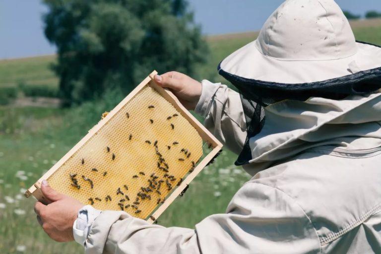 Информация для пчеловодов