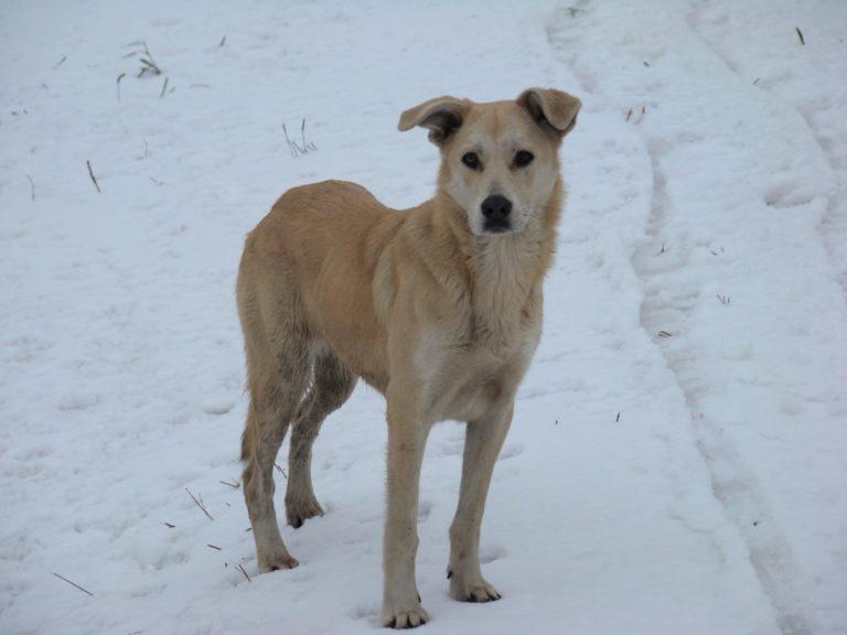Проведены рейды по соблюдению гражданами правил содержания собак в Слободском районе Кировской области