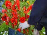 О недопустимости выращивания на своих участках наркосодержащих растений