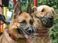 Единые требования к содержанию и выгулу домашних животных