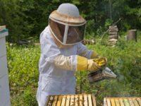 Об обеспечении безопасности пасек  при применении пестицидов