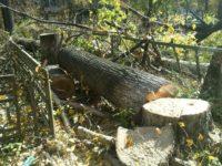 Разрешение на вырубку деревьев, растущих на территории, прилегающей к приусадебному земельному участку или произрастающих вблизи забора