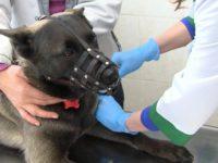 Бесплатная вакцинация домашних животных!