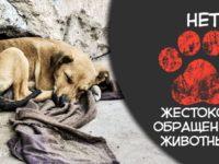 ИНФОРМАЦИОННЫЙ МАТЕРИАЛ о недопустимости жестокого обращения с животными