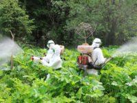 Внимание обработка борщевика на территории Стуловского сельского поселения гербицидами .